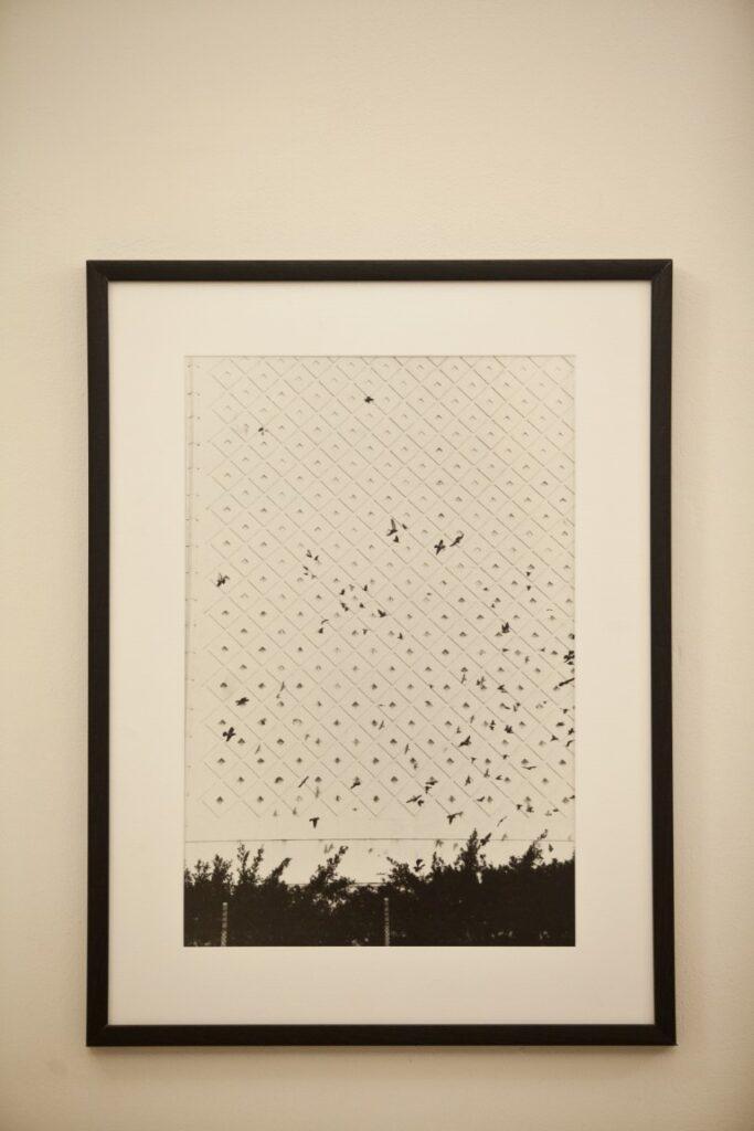אורית ישי, דגון, 2006